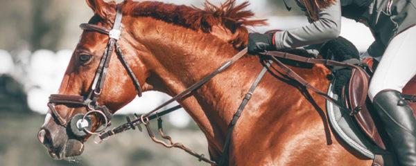 Matériel d'équitation professionnel en ligne
